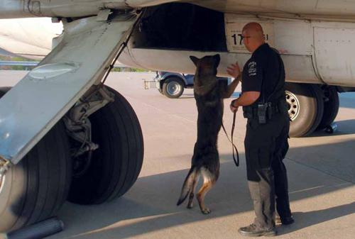 Explosive detection canine handler jobs employment